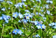 Wiosny natury okwitnięcie Zdjęcia Royalty Free