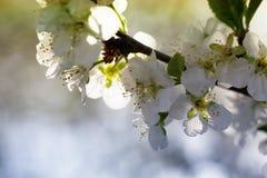 Wiosny natury sztuki tło z okwitnięciem Zdjęcia Stock