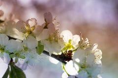 Wiosny natury sztuki tło z okwitnięciem Obraz Stock