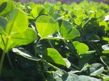 Wiosny natury tło z trawą i słońce błyszczymy Fotografia Stock