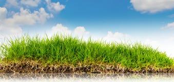 Wiosny natury tło z trawą wewnątrz i niebieskim niebem fotografia royalty free