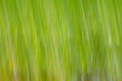 Wiosny natury zamazany tło zdjęcie royalty free