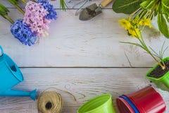 Wiosny ogrodnictwa pojęcie z kwiatami, żółtymi pierwiosnkami o i ogrodnictw narzędziami błękita i menchii, zdjęcie royalty free