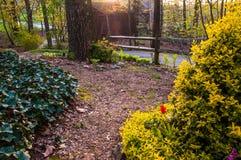 Wiosny ogrodowa scena pod wieczór światłem Zdjęcia Royalty Free