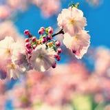 Wiosny okwitnięcia tło Piękna natury scena z kwitnącym drzewem i słońcem słoneczny dzień wiosna kwiat Abstrakta zamazany backgrou Zdjęcie Stock