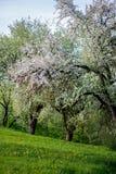 Wiosny okwitnięcia tło tła okwitnięcia ulistnienia pomarańczowy drzewo Wiosna druk Jabłoni gałąź jabłczana ogrodu zdjęcia wiosna  Obrazy Stock
