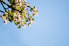 Wiosny okwitnięcie na niebieskim niebie fotografia stock