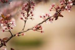 Wiosny okwitnięcie w parkach mój miasteczko z z ostrości tłem zdjęcie stock
