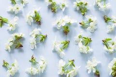 Wiosny okwitni?cia wz?r zdjęcie royalty free