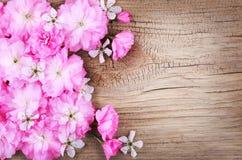 Wiosny okwitnięcie na Starym Drewnianym tle. Fotografia Stock