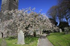 Wiosny okwitnięcie w Angielskim Churchyard Fotografia Royalty Free