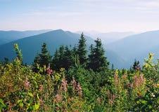 Wiosny panorama lasowy jezioro zdjęcie royalty free