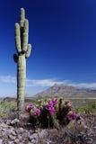 Wiosny piękno przy Picacho szczytu stanu parkiem, Arizona Fotografia Royalty Free