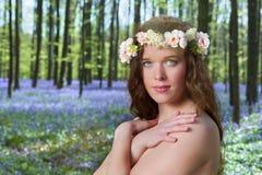 Wiosny piękno w bluebells lasowych zdjęcie royalty free