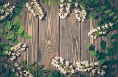 Wiosny pocztówka trójca Biała kwitnie akacja na tle ciemny drewno obrazy royalty free