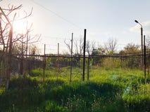 Wiosny pogoda, pogodny niebo, kwiatonośni drzewa w wiosce fotografia royalty free