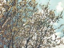 Wiosny pogoda, pogodny niebo, kwiatonośni drzewa w wiosce obrazy stock