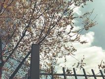 Wiosny pogoda, pogodny niebo, kwiatonośni drzewa w wiosce fotografia stock