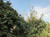 Wiosny pogoda, pogodny niebo, kwiatonośni drzewa w wiosce zdjęcie stock