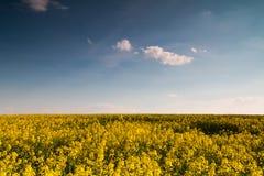 Wiosny pola gwałt obraz stock
