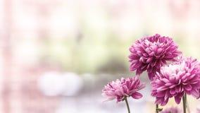 Wiosny pola kwiatów krajobraz z jaskrawymi kolorowymi kwiatami Obrazy Royalty Free