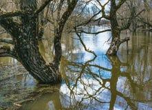 Wiosny powódź zdjęcia royalty free