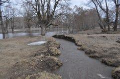 Wiosny powódź w lesie Obraz Stock
