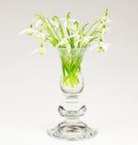 Wiosny powitanie, śnieżyczka Obrazy Royalty Free