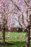 Wiosny przespacerowanie obraz stock