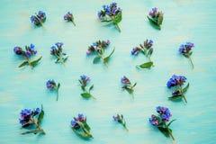 Wiosny rabatowy tło z białym okwitnięciem Obrazy Stock