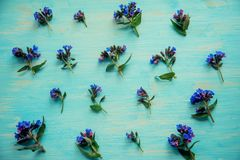 Wiosny rabatowy tło z białym okwitnięciem Zdjęcie Stock
