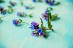Wiosny rabatowy tło z białym okwitnięciem Obraz Royalty Free