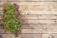 Wiosny rabatowy tło z kwiatami Fotografia Stock