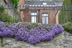 Wiosny radość w Belgia obraz stock