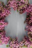 Wiosny rama z kwiatem bez Rama piękni kwiaty na szarej drewnianej powierzchni Rocznika tonowanie Z przestrzenią Fotografia Royalty Free