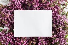 Wiosny rama z kwiatem bez Rama piękni kwiaty na szarej drewnianej powierzchni Rocznika tonowanie Z przestrzenią Fotografia Stock