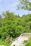 Wiosny roślinność i las fotografia royalty free