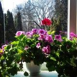 Wiosny roślina obrazy royalty free