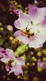 Wiosny ruchliwie ciało Zdjęcie Royalty Free