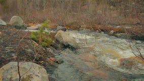 Wiosny rzeka zbiory