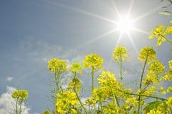 Wiosny słońca światło Zdjęcia Royalty Free