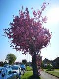 Wiosny it& x27; s piękny czas dla obrazków zdjęcia royalty free