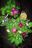 Wiosny sałatka, dzicy ziele, jadalni kwiaty Zdjęcia Stock