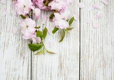 Wiosny Sakura okwitnięcie Obrazy Royalty Free