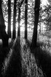 Wiosny scena z dębowym gajem, ciemnymi drzewami, światłem słonecznym i cieniami, quercus Robur zdjęcie stock