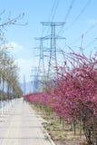Wiosny ulica fotografia stock