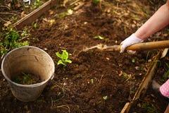 Wiosny seedbed z żelaznym koszem i ręką z łopatą Fotografia Stock