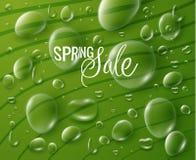 Wiosny sprzedaży wektoru tło Zdjęcia Royalty Free