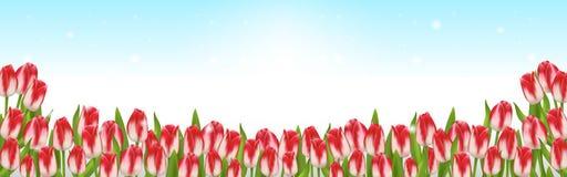 Wiosny tło z tulipanami i niebieskim niebem ilustracji