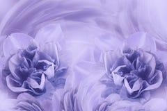 Wiosny tło światło delikatnie - purpurowi kwiaty narcissuses Zakończenie zdjęcie stock